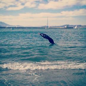 1. Swim!